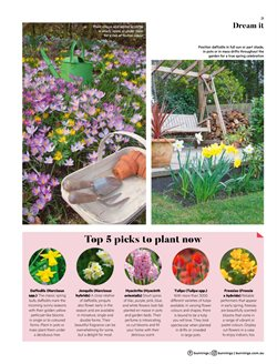 DIY & Garden offers in the Bunnings Warehouse catalogue ( 23 days left )